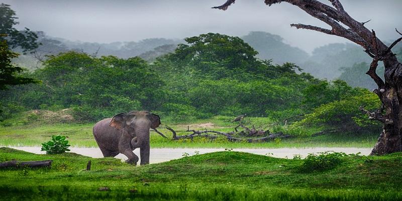 tanie loty na srilanke
